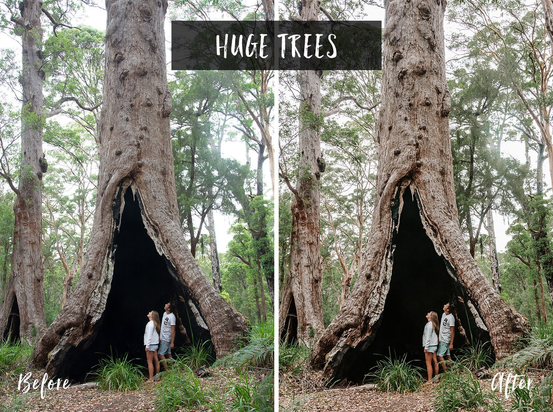 Huge Trees | Flip Flop Wanderers Presets
