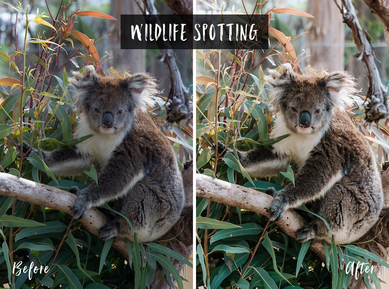 Wildlife Spotting | Flip Flop Wanderers Presets